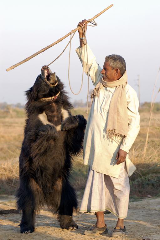 Sloth-Bear-DancingBear23Hi