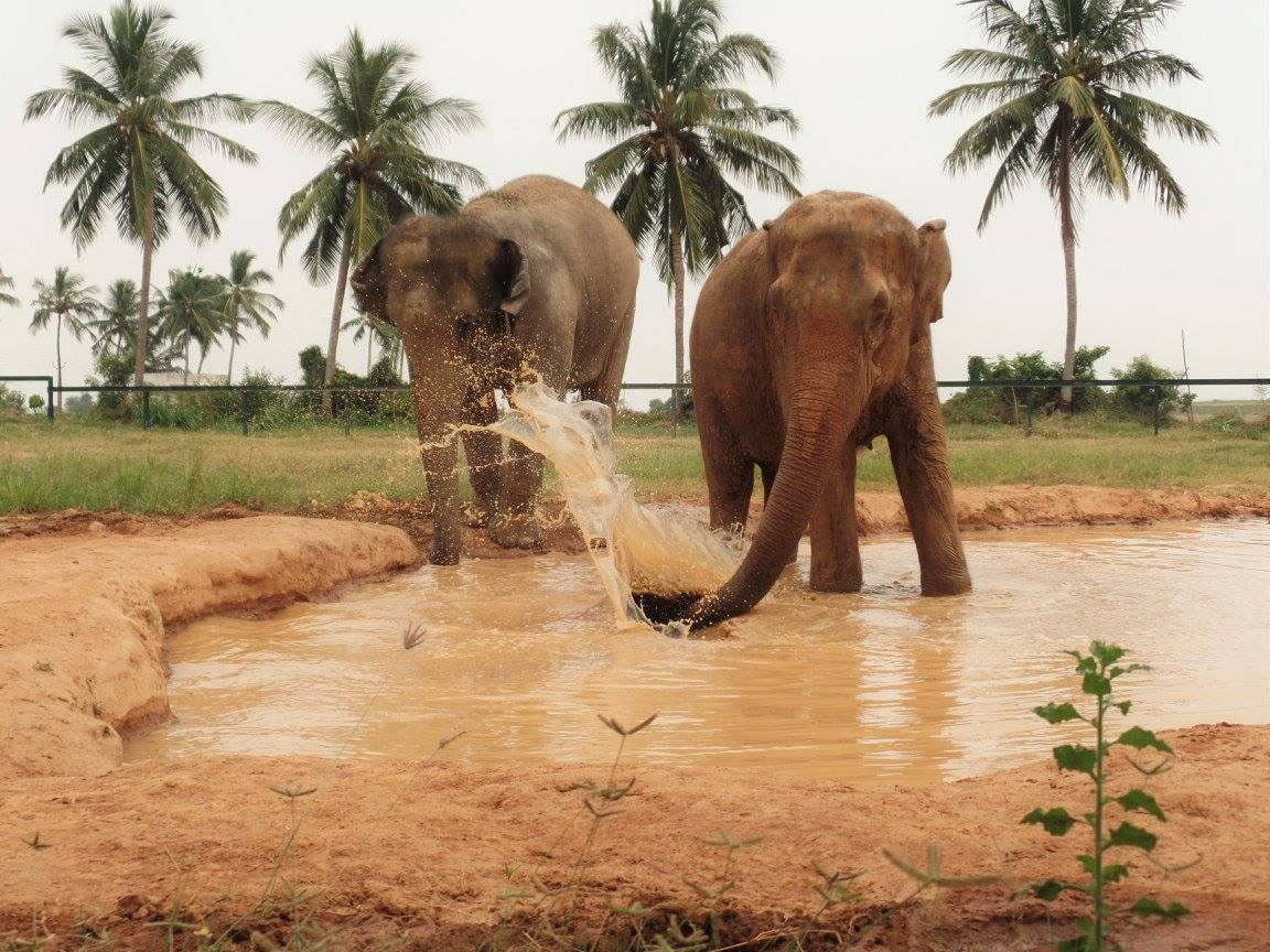 WRRC Elephants